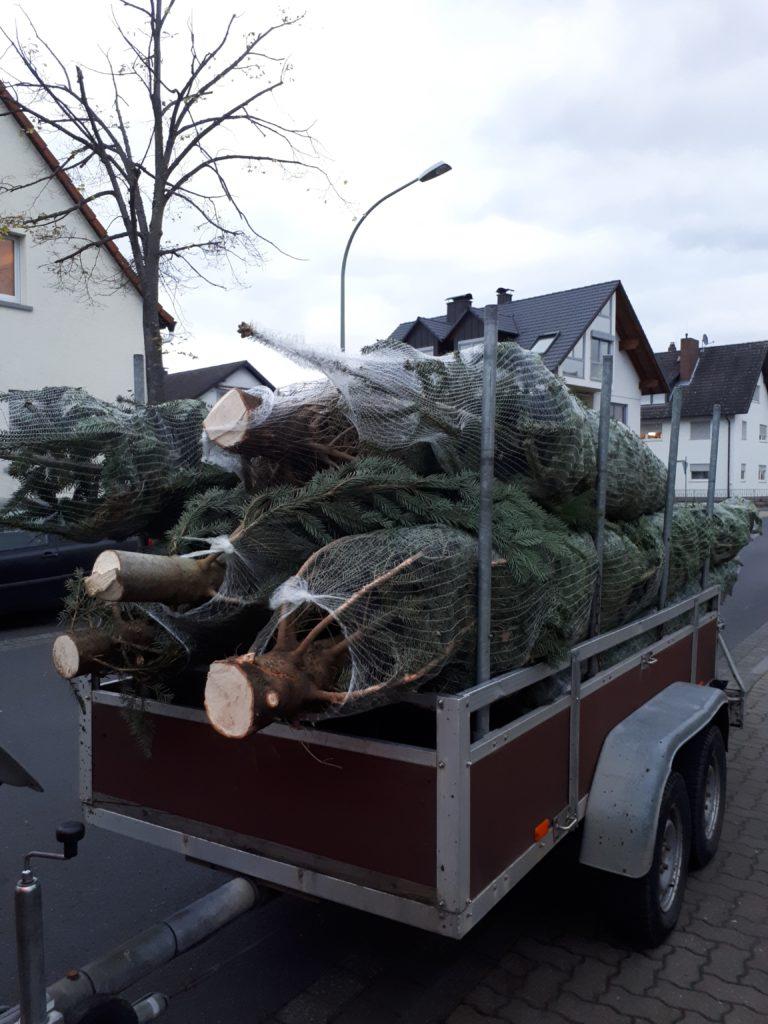 So liefern wir Ihnen den Weihnachtsbaum